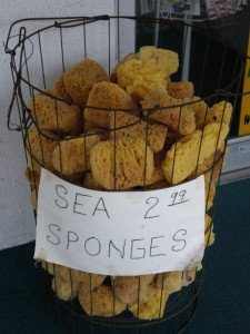 Lovin the Sea Sponges
