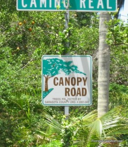 This canopy road is Camino Real, near the Oyster Bay neighborhood of Sarasota