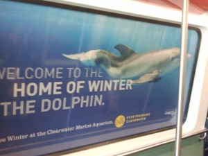 Winter the Dolphin Rides on Tampa Airport Monorail
